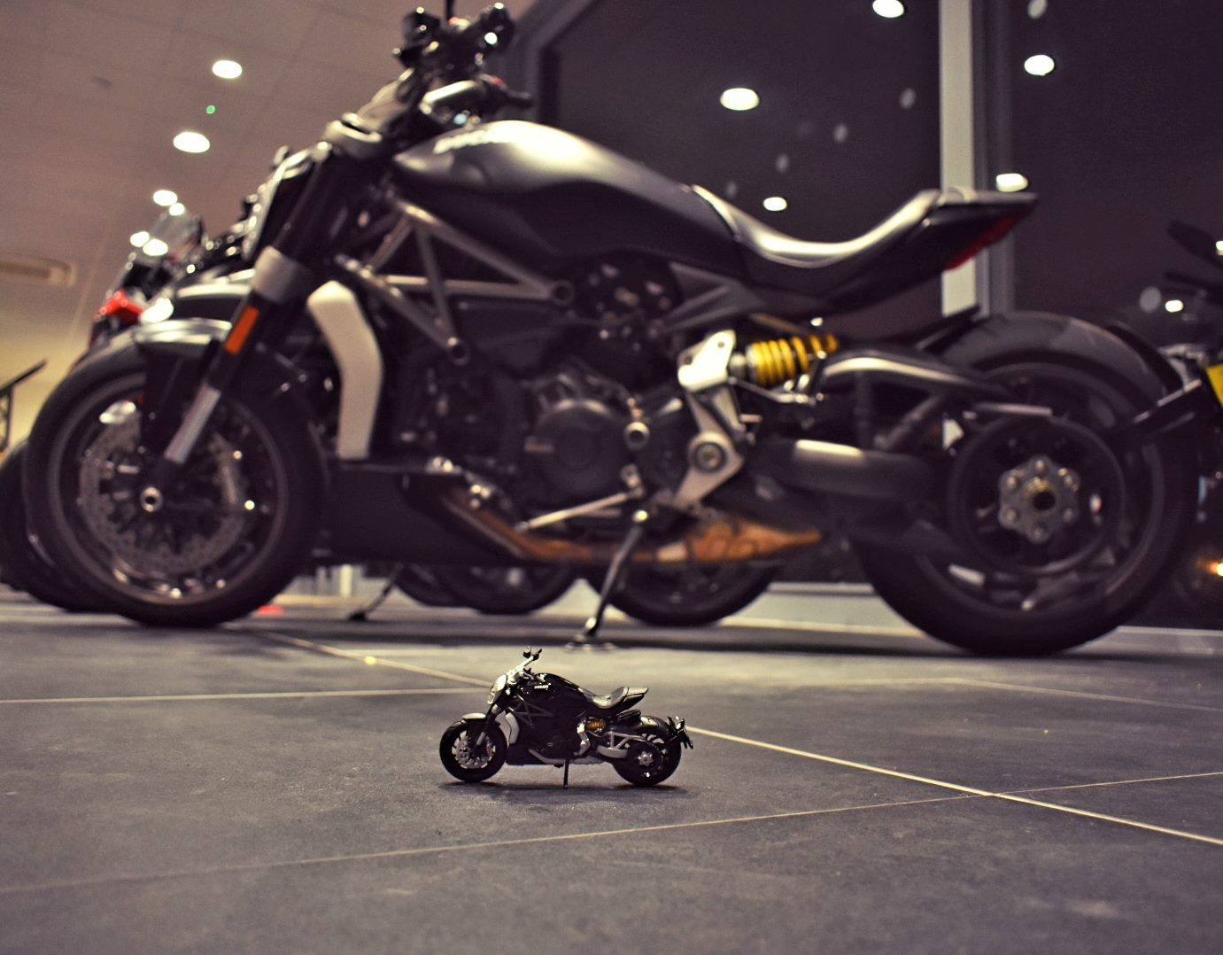 Big or small, We have an Xdiavel for everyone... #notmachinewashable #xdiavel